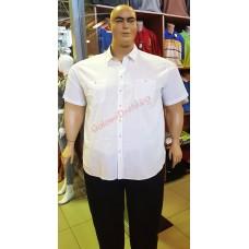 Бяла риза с къси ръкави 3XL - 4XL - 5XL - 6XL лен-памук